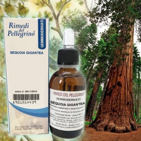Gemmoderivato Sequoia,Sequoia Gigantea 50ml