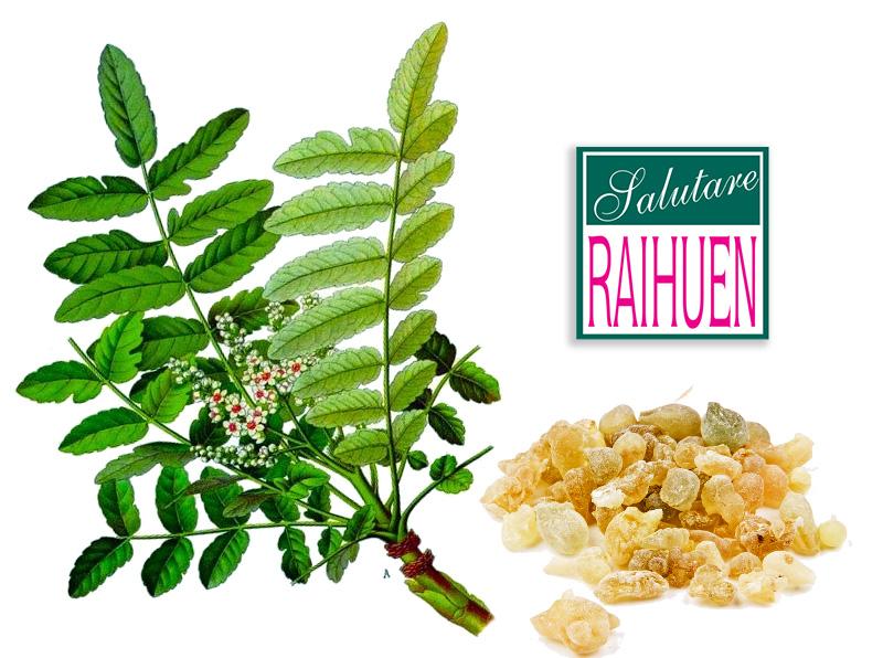 boswellia-serrata-raihuen-crema