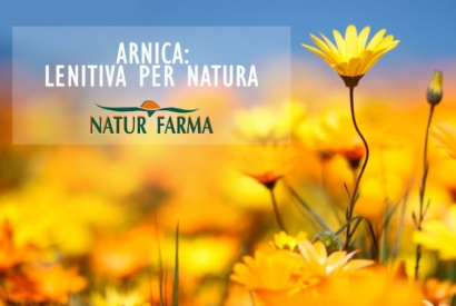 ARNICA : Scopri le proprieta curative e antinfiammatorie